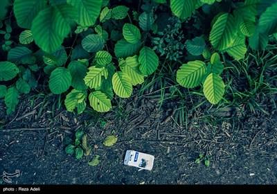 آلودگی محیط زیست در جنگل گیسوم - تالش