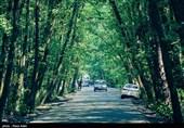 11 پارک جنگلی چهارمحال و بختیاری به بخش غیردولتی واگذار میشود