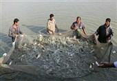 هدفگذاری برای توسعه پایدار پرورش ماهی در گیلان؛ 43 هزار تن ماهی گرمابی سال گذشته تولید شد