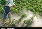 قیمت کود و سموم شیمیایی 5 برابر افزایش یافت/ آتش بی تدبیری در خرمن کشاورزان لرستانی