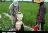 سهم ناچیز کشت ارگانیک در کشور / ایران رتبه قابل قبولی در کشت ارگانیک در سطح جهان ندارد