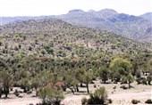 500 میلیون تومان برای راهاندازی صندوق حمایت از توسعه منابع طبیعی خراسان جنوبی اختصاص یافت