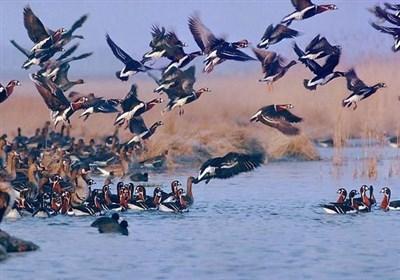 سازمان محیطزیست: تمام پرندههای مهاجر در فریدونکنار شکار میشوند