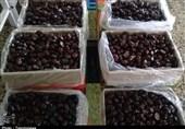 خرما های انباشته شده در سردخانه ها با قیمت مناسب در بازار توزیع میشود