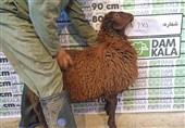 دام کالا، سایتی میتوانیم از آن گوسفند زنده را خریداری کنیم