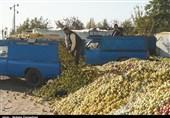 فروش سیب به صورت غیربهداشتی در کنار جاده در ارومیه به روایت تصویر