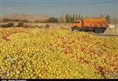 قیمت خرید توافقی سیب صنعتی 1500 تومان شد/ محصول باغداران استان آذربایجان غربی کنار جاده درحال پوسیدن