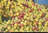 سیب تولیدی آذربایجانغربی بازهم کنار جاده دپو شد