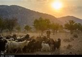 5 طرح تامین آب عشایر در چهارمحال و بختیاری به بهرهبرداری رسید