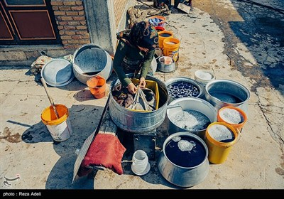 ملکان ، قطب تولید انگور در کشور