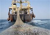 """افزایش 71 کشتی صید ترال در 5 سال اخیر/ جایگزینی """"ترال کف"""" با """"ترال میانآبی"""""""
