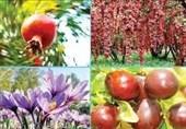 هشت هزار تن لیمو ترش در شهرستان گچساران برداشت شد
