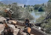 تیشه بر ریشه درختان کهنسال دورود؛ درختان مسیر رودخانه تیره قلع و قمع شدند+تصاویر
