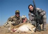 سند جدیدی از نقض ادعای کلانتری درباره سن حیوانات شکارشده + فیلم