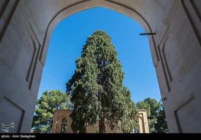 مسجد جامع کبیر نی ریز فارس یکی از شاهکارهای معماری ایرانی