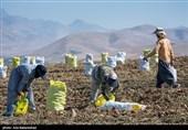 هشدارهای مهم سازمان هواشناسی به کشاورزان تا 4 آبان