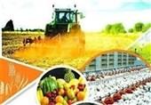 ایجاد زنجیرههای ارزش سبب ارزآوری بیشتر در بخش کشاورزی میشود