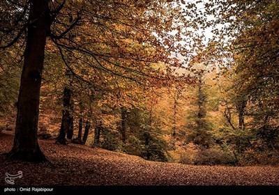 طبیعت پاییزی روستاهای اشکورات گیلان