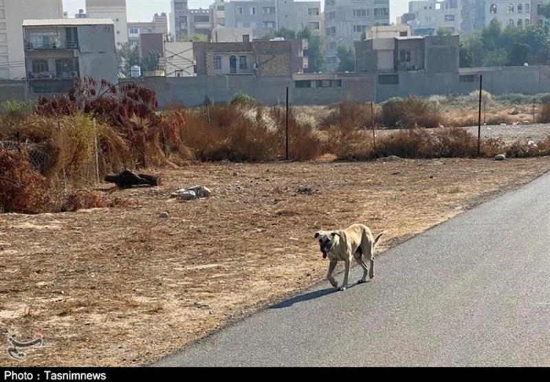 جولان سگهای ولگرد در اماکن بیمارستانی بندرعباس/ مصدومیت دانشجوی پزشکی بر اثر حمله سگهای ولگرد + تصاویر
