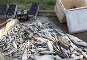 بررسی مشکلات تولیدکنندگان ماهیان گرمآبی و سردآبی