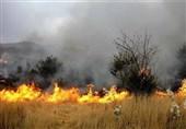 """آتشسوزی """"جنگلهای میانکاله"""" تا حدی عمدی بود!"""