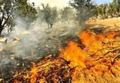"""فیلم// آخرین وضعیت آتشسوزی جنگل """"توسکستان"""""""