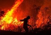 """علت آتشسوزی جنگل """" توسکستان """" مشخص شد/ اعزام 140 نیرو برای اطفاء حریق"""