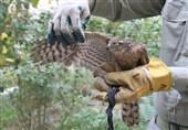 تشدید برخورد با شکارچیان غیرمجاز در استان تهران
