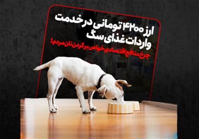 ارز 4200 تومانی در خدمت واردات غذای سگ