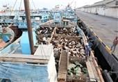 نیروی دریایی سپاه محموله بزرگ دام قاچاق را در آبهای خلیج فارس توقیف کرد / بازداشت 6 قاچاقچی و کشف 750 رأس دام