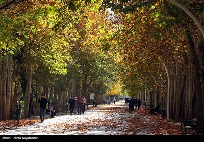 Fall Foliage in Parks Attracts People in Mashhad