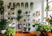 روی آوردن مردم روسیه به خرید گیاهان آپارتمانی با محدودیت های کرونایی