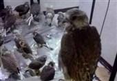 کشف محموله قاچاق پرندگان شکاری در بوشهر