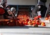 راهاندازی اولین اورژانس محصولات کشاورزی توسط بنیاد برکت