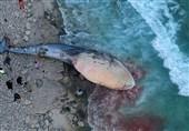 مشخص نبودن علت تلف شدن یک نهنگ در سواحل جزیره کیش
