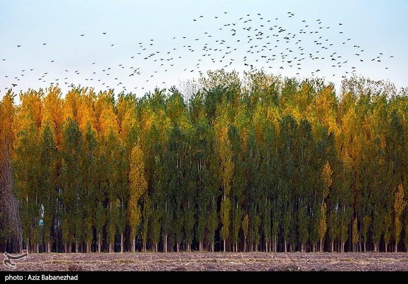 طبیعت پاییزی الشتر - لرستان