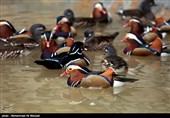 فعالیت باغ پرندگان قم پس از دوره اعلام شده در ضدعفونی محیط از سر گرفته میشود