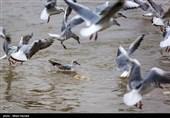 کاهش ورود پرندگان مهاجر به کرمانشاه/ 80 گونه از پرندگان مهاجر در کرمانشاه وجود دارد