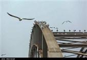 پرندگان مهاجر میهمان رودخانه زیبای کارون + فیلم
