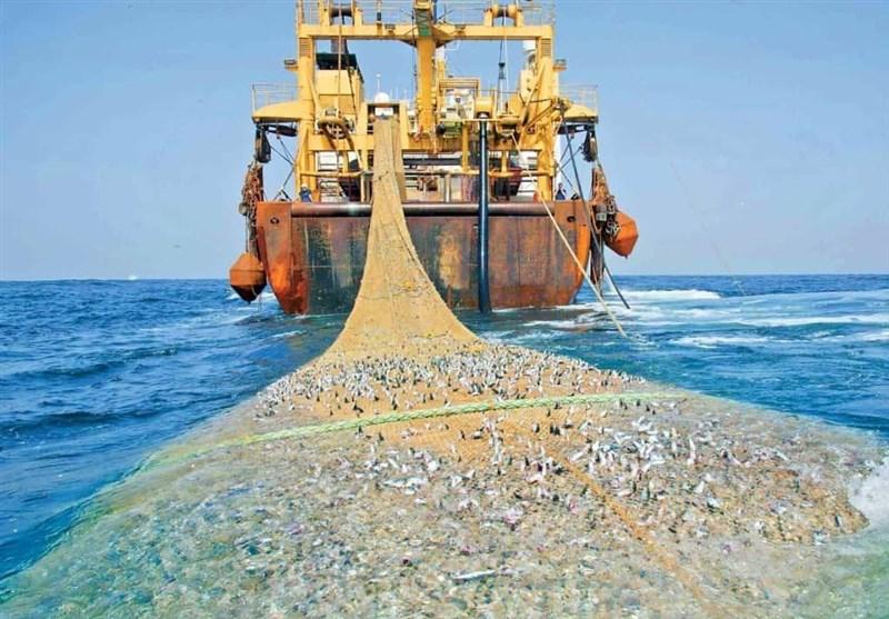 توقیف شناور غیرمجاز صید ترال در بندر جاسک/کشف 600 کیلوگرم انواع آبزیان از لنج + فیلم