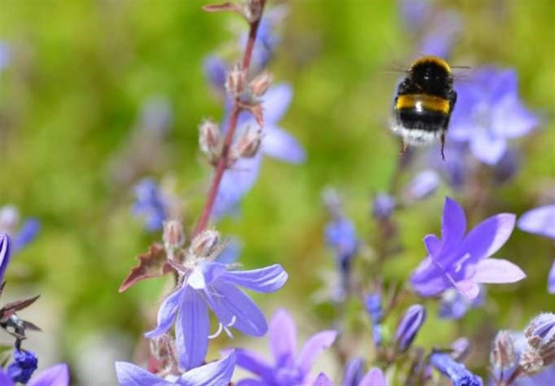 Next-Generation Drones Could Learn from Bumblebees' Flight
