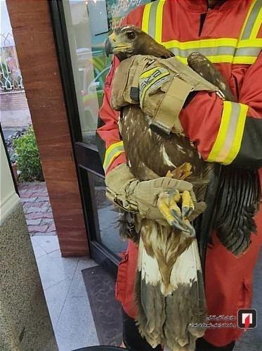 آتشنشانی , سازمان آتشنشانی تهران , سازمان محیط زیست , حوادث ,
