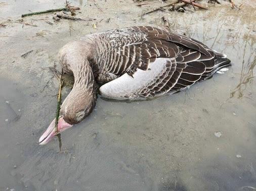 بحران های محیط زیست , سازمان محیط زیست , پرنده , تالابهای ایران , آنفلوآنزا ,
