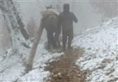 دستور استاندار گلستان برای شناسایی قاچاقچیان سرخدار در روستای زیارت
