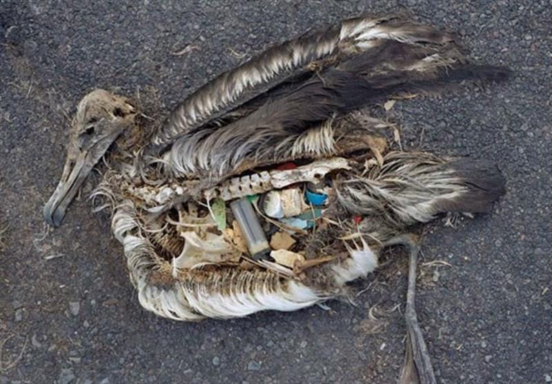 فیلم// بلایی که زبالههای پلاستیکی بر سرِ محیط زیست میآورند