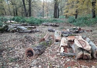 تعریض جاده به قیمت قطع هزاران درخت بلوط هزار ساله/ مرگ دنا در خاموشی