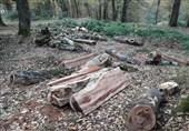 دادگستری مازندران درباره قطع درختان مرکبات مثمر در سوادکوه شمالی توضیحاتی ارائه کرد