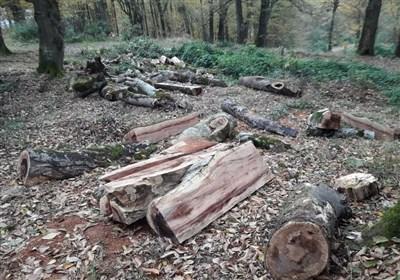 تصاویر// قطع غیرقانونی درختان در گرگان