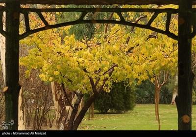 حال و هوای پاییز در قم