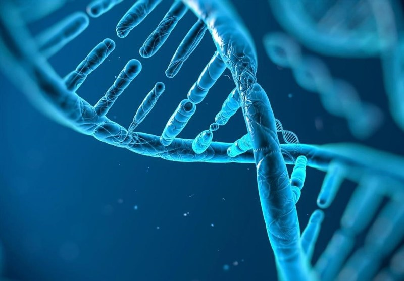 Scientists Identify Gene Responsible for Aging